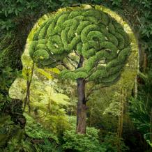 trees-brain
